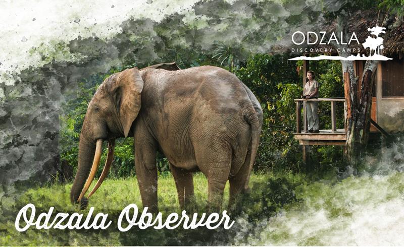 Odzala Observer – Newsletter Issue 5