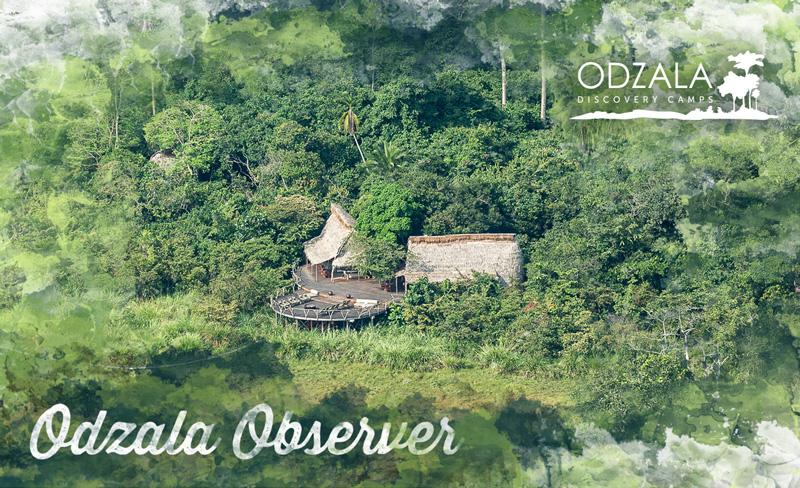Odzala Observer – Newsletter Issue 6