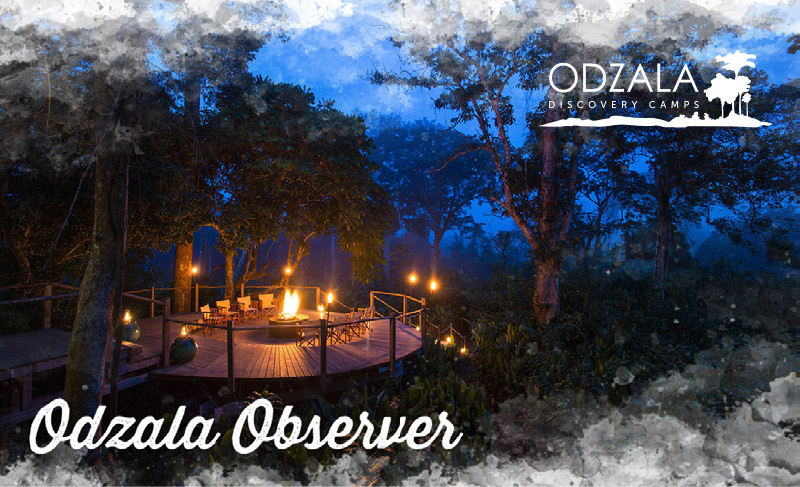 Odzala Observer – Newsletter Issue 7