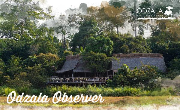 2016odzala-observer-9-1