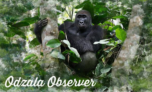 Odzala Observer – Newsletter Issue 10