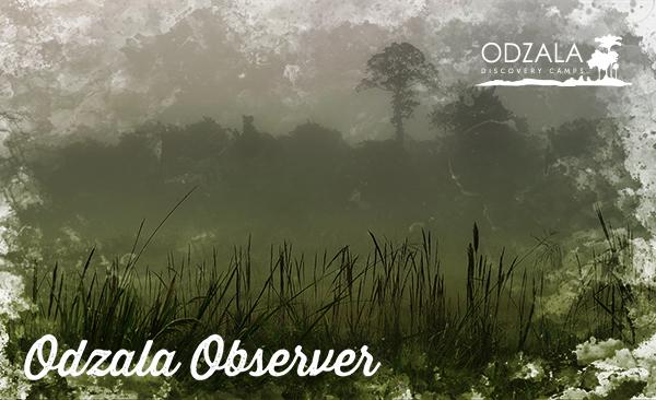 Odzala Observer – Newsletter Issue 11 – Part 3