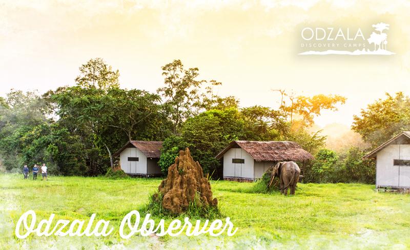 Odzala Observer – Newsletter Issue 12 – Part 3