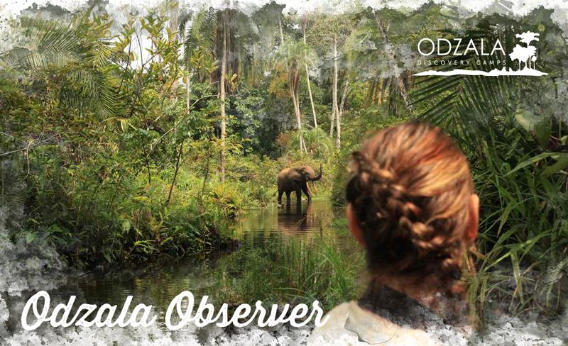 Odzala Observer – Newsletter Issue 12 – Part 4
