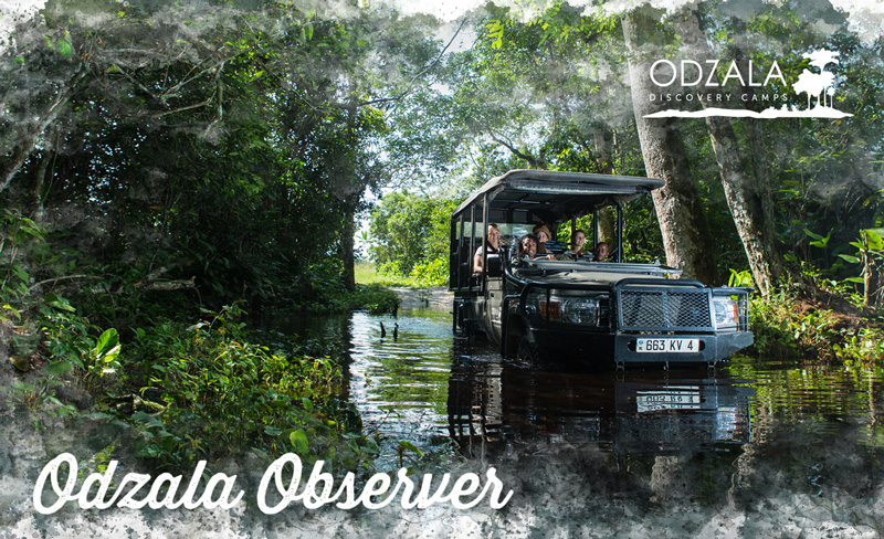 Odzala Observer – Newsletter Issue 12 – Part 1