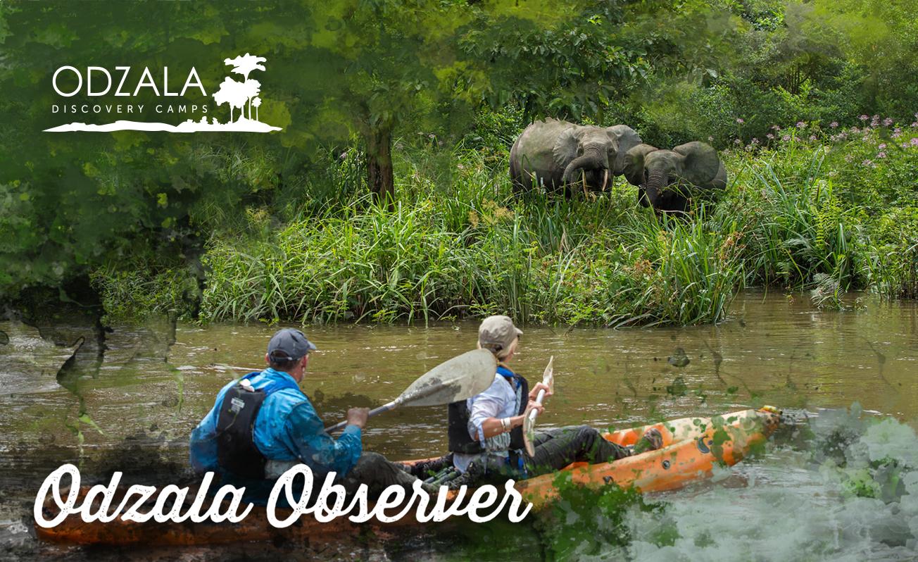 Odzala Observer – Newsletter Issue 13 – Part 3