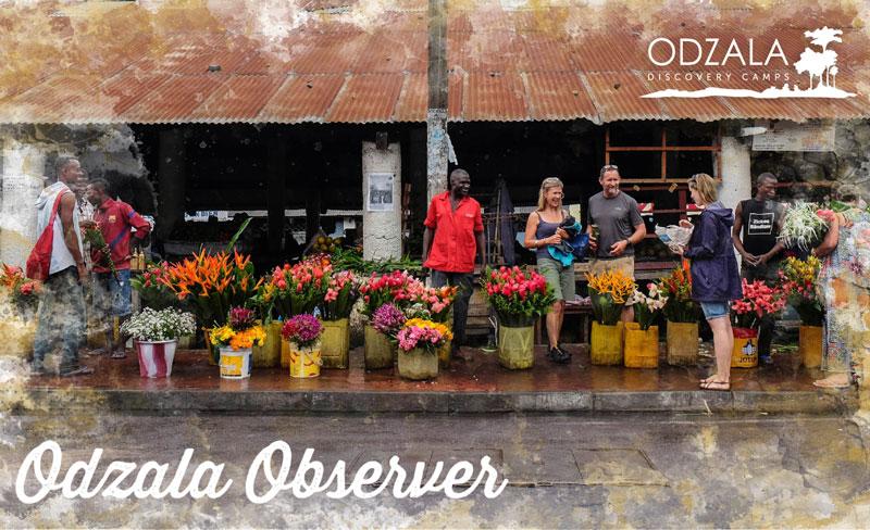 Odzala Observer – Newsletter Issue 14 – Part 1