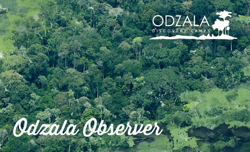 Odzala Observer – Newsletter Issue 15 – Part 1
