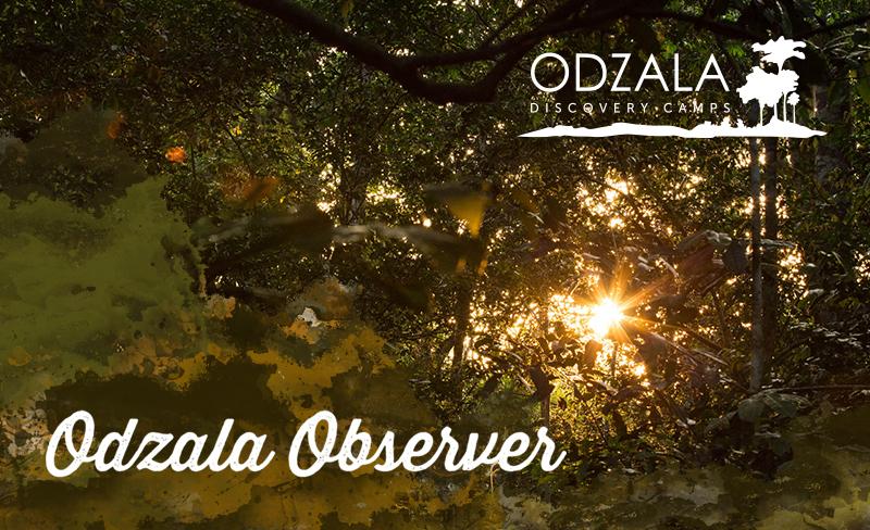 Odzala Observer – Newsletter Issue 15 – Part 2